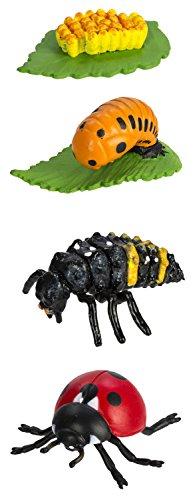 Toob Lebenszyklus eines Marienkäfers, Miniatur-Figuren (Marienkäfer Miniatur)