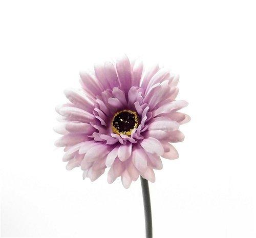 fs 4 x künstliche Gerbera mit einem Stiel und großer Blüte, fliederfarben / Lavendel