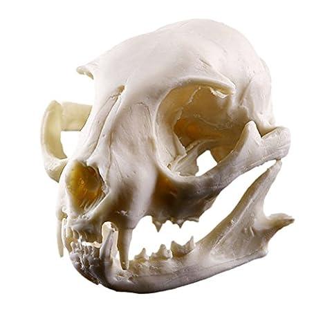 ROSENICE Katze Schädel Modell Skelett Halloween Dekoration Figur Aquarium Ornament