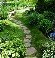 Sagina subulata Plattenmoos 250 Samen, Mastkraut Sternmoos von grow your secret garden bei Du und dein Garten