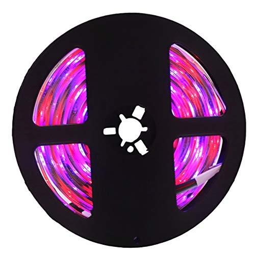 Cinturón De Peso Ligero Colorido Tira de luz LED IP65 a prueba de agua 300led 5M 3528 SMD RGB DC flexible 12V Techo de luz LED Tira de luz Tira de luz, para festivales Monitores Tienda Windows y tiend