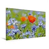 Calvendo Premium Textil-Leinwand 120 cm x 80 cm Quer, Mohn und Kornblumen | Wandbild, Bild auf Keilrahmen, Fertigbild au