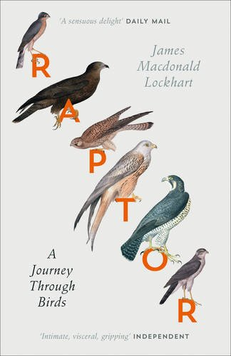 raptor-a-journey-through-birds