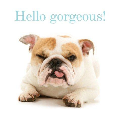 Bulldog Hello Gorgeous! Blank Greeting