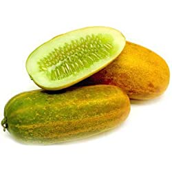 Cucumber Yellow F1 Hybrid Seeds - Vegetable Seeds For Pots : Kitchen Garden Pack by Creative Farmer