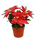HAAC künstliche Weihnachtsstern im Topf mit 3 Blumen Farbe rot Größe 20 cm für Weihnacht Weihnachten