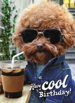 Humorvolle Geburtstagskarte für Männer/Frauen, aus der Avanti Reihe, Motiv: Hund mit Sonnenbrille, Kaffee, Schattierungen, Chill - Grußkarte für Ihn (GBCC-AVEDH0017) -