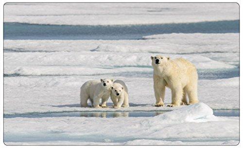 Eisbär Eis Schnee Alaska Wandtattoo Wandsticker Wandaufkleber R1304 Größe 70 cm x 110 cm -