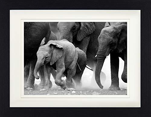 1art1 113623 Elefanten - Elefantenherde, Namibia, S/W Gerahmtes Poster Für Fans Und Sammler 40 x 30 cm -