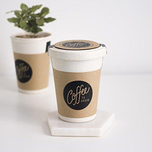 Firebox Coffee to Grow - Kaffee Selbst anpflanzen