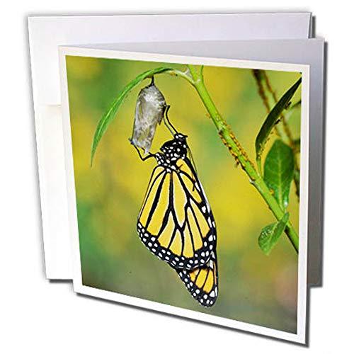 3dRose gc_279569_2 - Tarjeta de felicitación de Navidad con diseño de  mariposa de Monarch de Chrysalis, Hill Country, Texas (12 unidades)