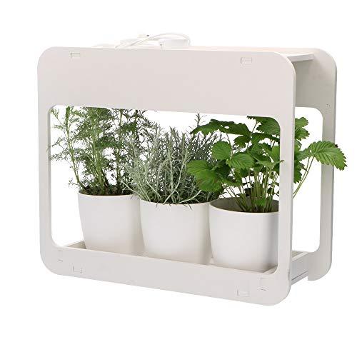 Proventa | Mini-Gewächshaus mit LED-Pflanzlicht | Innengarten | Pflanzenlicht | Kräutergarten | Kräuter selbst züchten | Gekaufte Kräutertöpfe länger frisch halten | 14 Watt