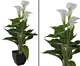 Calla Kunstpflanze im Topf mit 3 weißen Blüten 43cm - Kunstpflanze künstliche Blumen Kunstblumen Blumensträuße künstlich, Seidenblumen oder Blumen aus Plastik Kunststoff