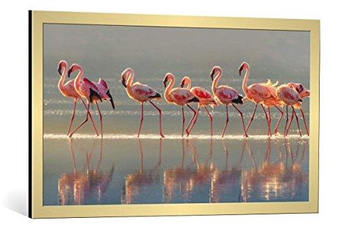 kunst für alle Bild mit Bilder-Rahmen: Phillip Chang Flamingo - dekorativer Kunstdruck, hochwertig gerahmt, 100x55 cm, Gold gebürstet