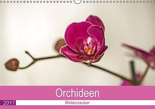 blutenzauber-orchideen-wandkalender-2017-din-a3-quer-lassen-sie-sich-von-zauberhaften-orchideenblute