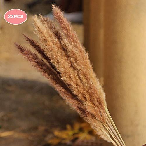 fllyingu Getrocknetes Kleines Pampasgras - Für Inneneinrichtungen | Fotografie-Werkzeug | Hochzeitsdekor, Phragmites Communis, 27 Psc, Weiß Und Kaffeefarbe -