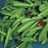 seekay ASPERGE pois environ 160 GRAINES - Légumes