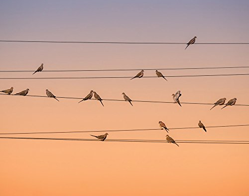 JP London cnv1 X 846789 Musik von Licht Birds on a Wire Dusk 5,1 cm Dick Schwere Galerie Wrap Leinwand Wand Art, 2 'x 1,5' (2' Wire)