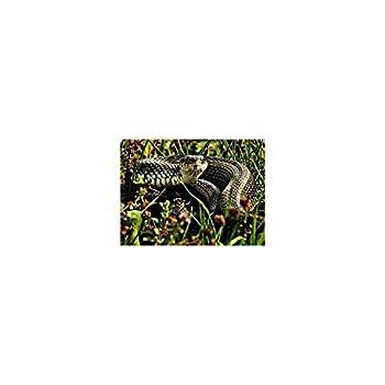 M2000 Répulsif solaire serpent et rongeurs à vibrations