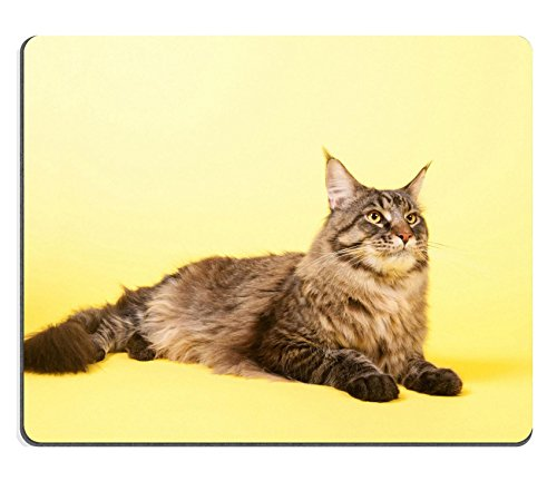 liili-mouse-pad-natural-rubber-mousepad-image-id-24860679-portrait-pedigree-maine-coon-cat-on-pastel