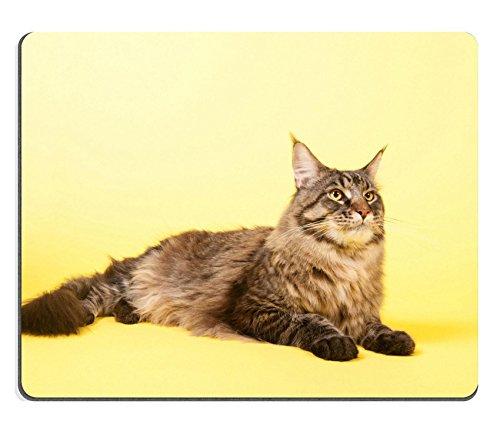 liili-mouse-pad-de-goma-natural-mousepad-imagen-id-24860679-retrato-pedigree-maine-coon-gato-sobre-p