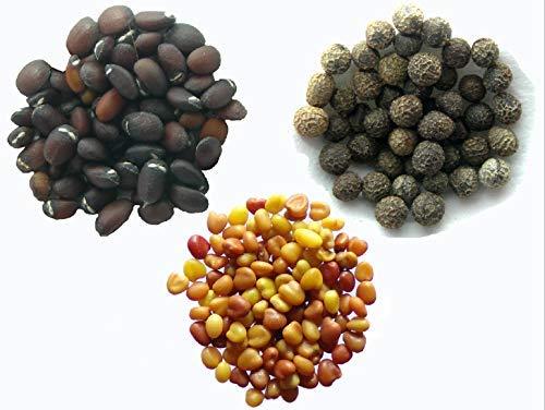 Vos Favoris 2016 - 3 sachets: 1 sachet de Cataire 70 graines + 1 sachet de Pavot de Californie 40 graines + 1 sachet de Micro Trèfle 1 gramme
