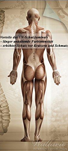 Wallario Selbstklebende Türtapete mit Schutzlaminat, Motiv: Anatomie Mensch I - Größe: 93 x 205 cm in Premium-Qualität: Abwischbar, brillante Farben, rückstandsfrei zu entfernen