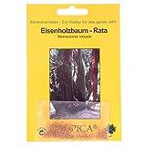 Bonsai -200 Samen Eisenholzbaum, Rata, Metrosideros robusta 90103