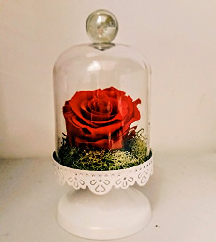 Rosa natural preservada en campana de cristal y chocolate de Pétalos