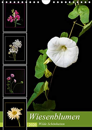 Wiesenblumen - Wilde Schönheiten (Wandkalender 2020 DIN A4 hoch): Leuchtende Wiesenblumen vor schwarzem Hintergrund (Monatskalender, 14 Seiten ) (CALVENDO Natur)