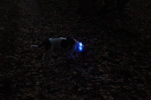 LumiVision Akku Leuchthalsband 40 cm Wiederaufladbares, wasserdichtes LED Leuchthalsband für Hunde blau - 3