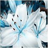 Fash Lady Semillas de Lirio, Semillas de Lirio de Perfume, Mezcla de Diferentes variedades Semillas de Flores- 100 Piezas 6