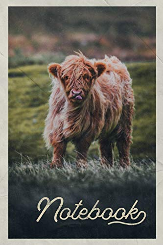Notebook: Aberdeen Angus Cattle Excellent Composition Book Journal Diary for Men, Women, Teen & Kids Vintage Retro Design for researching where to see Highland Cows in Scotland Antique Rose Farm