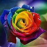 #8: Azalea Garden Rare Exotic Rose Flower (Multicolour) - 1 Live Plant