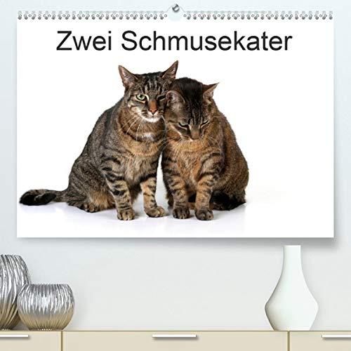 Zwei Schmusekater (Premium-Kalender 2020 DIN A2 quer): Zwei hübsche Kater im Fotostudio (Monatskalender, 14 Seiten ) (CALVENDO Tiere) (Kater Kalender)