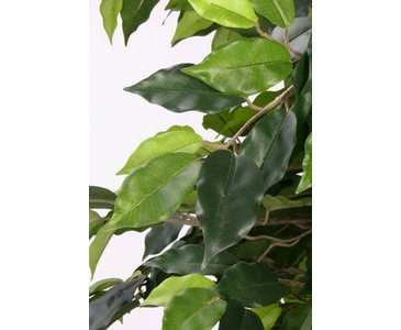 Ficus Benjamini Multitrunk, mit 1440 Blätter, Höhe ca.180cm – Kunstbäume Kunstbaum künstliche Bäume Kunstpflanzen Kunstpalmen Dekopalmen