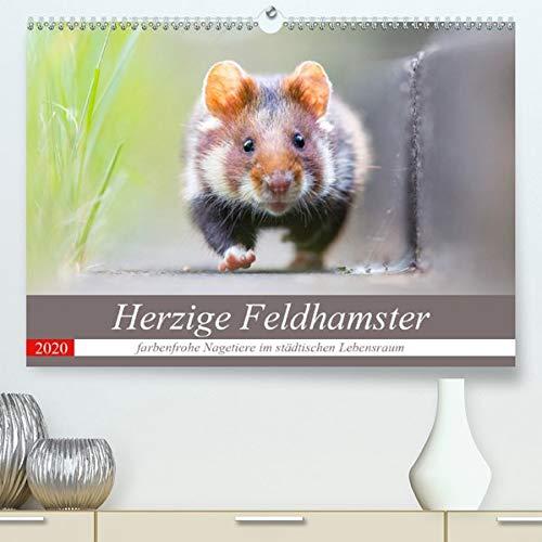 Herzige Feldhamster - farbenfrohe Nagetiere im städtischen LebensraumAT-Version(Premium, hochwertiger DIN A2 Wandkalender 2020, Kunstdruck in ... (Monatskalender, 14 Seiten ) (CALVENDO Tiere) -