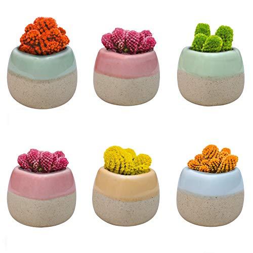 Pflanzentöpfe (6-er Pack) - H5,5cm Mini Blumentopf Set aus Keramik mit Abflussloch für Sukkulenten Pflanzen und Kaktus - Tontopf Set ideal als Dekoration Zuhause, Büro, Innen, Draußen, Garten