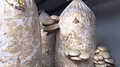 7 bolsas grandes, seta bolsas, para el cultivo de ostras, shiitake, 35cmx70cm (14x28inc),4mic