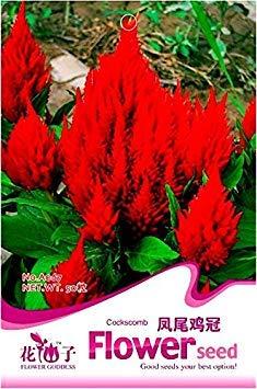 Visa Store 2018 Heißer Verkauf Celosia Argentea Rot Plumed Cockscomb Jährliche Bonsai Blumensamen, Original Pack, 50 Samen/Pack, Silber Cock Kamm A067