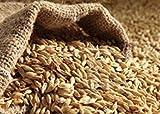 Potseed Germination Les graines: Orge semences - 50 grammes