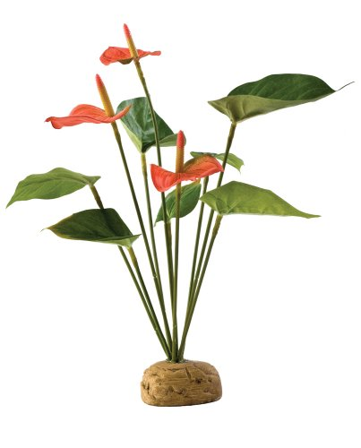 Exo Terra Flamingoblume (Terrarien Für Pflanzen)