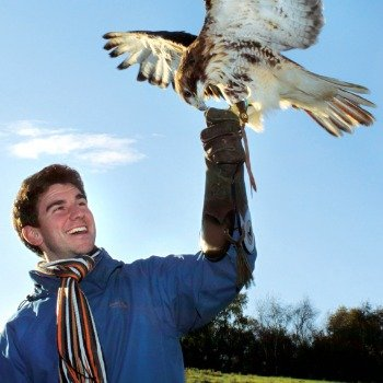 half-day-bird-of-prey-experience-nationwide