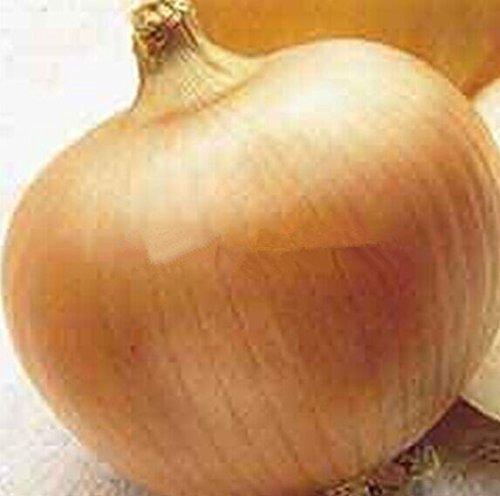 100 graines géant oignon jaune doux espagnol semences de légumes germination 95%, Giant graines d'oignon de légumes pour bonsaïs de jardin