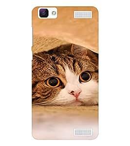 EPICCASE Cutie Cat Mobile Back Case Cover For Vivo V1 Max (Designer Case)