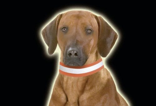 Artikelbild: Karlie Reflex Leuchthalsband Elast/Klett 40 mm 45 cm, Neon orange