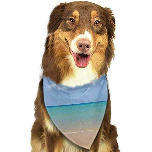 hulili Pet Dog Scarf Ocean Shadow Shade of a Coconut Palm Tree on White Sandy Seashore Image Scarf for Small and Medium Dogs and Cats