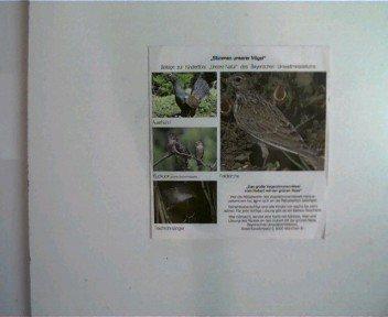 Stimmen unserer Vögel - Vogelstimmenrätsel vom Hubert mit der grünen Nase Erscheinungsjahr um (Nase Vogel)