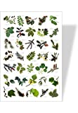 Achat nature - poster nature feuilles