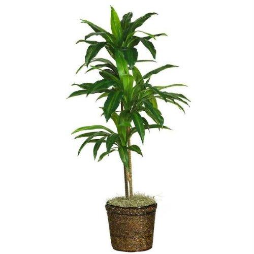 Fast natur 121,9cm Dracaena W/Korb Silk Plant (Real Touch)